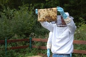 Bienen in Westernohe